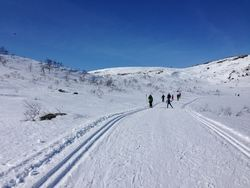Bildet viser skiløpere i skispor