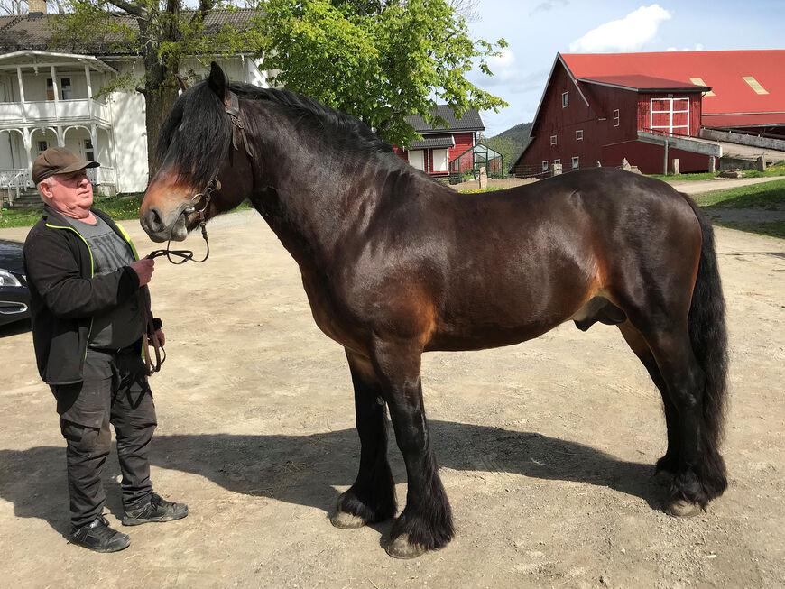 Spjotums Lunar sammen med eier Herman Åge Lindberg. Han eier hesten sammen med Jens Tangen.