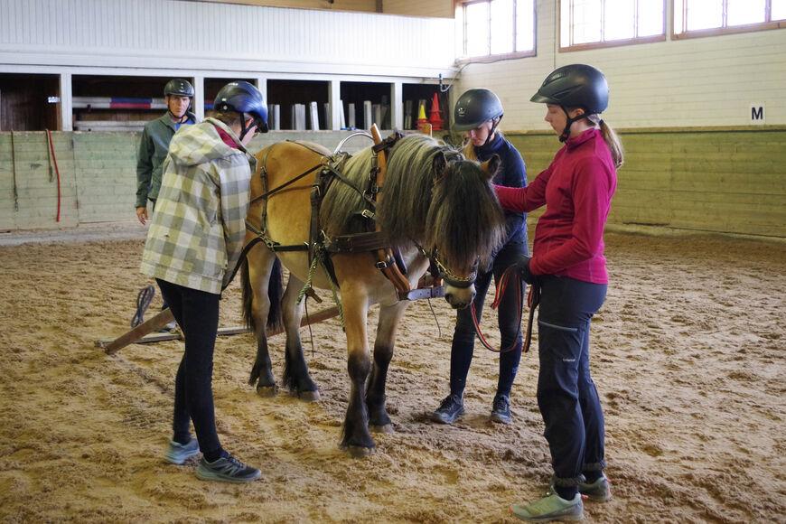 Glomstad Eirika sammen med Øystein Bakken, ansvarlig for utdanningsoppholdet, og våre lærlinger i hestefag.
