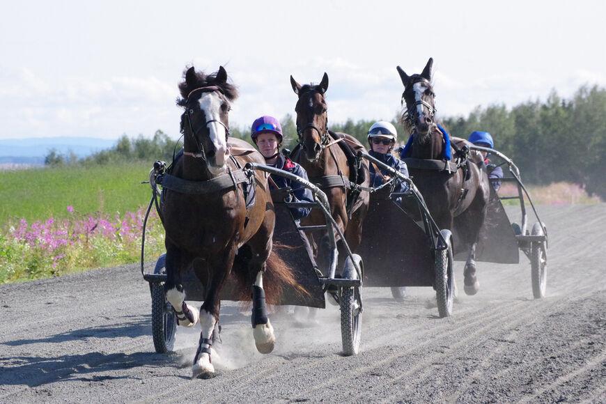 Norsk Hestesenter har fagskoleutdanningene ridelærer og travtrener.