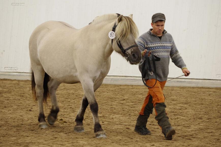 Klotstugus Oda fikk 2. premie på høstens utstilling på Starum, og har fått tildelt stamboknummer 17627F.