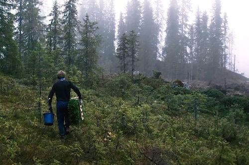 Thor Gotaas: Mannen som planter skog. Foto er skjermdump fra Ole Magnus Kinapel sin film med samme navn.