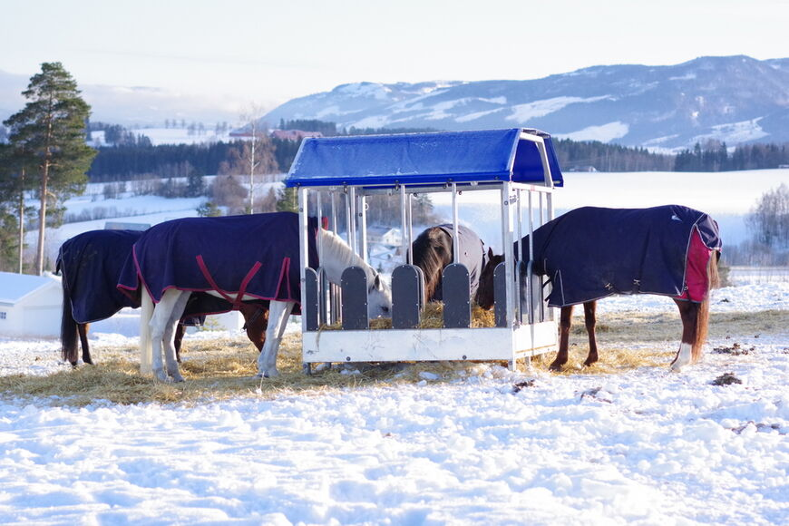 Hester som spiser ute.