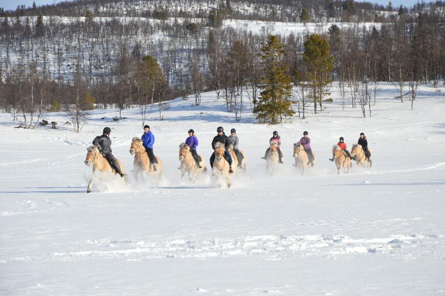 Fjordhester i snøen.