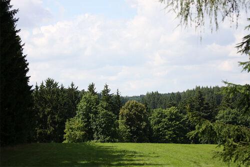 Skog. Foto: Geir Nilsen/Langrenn.com.