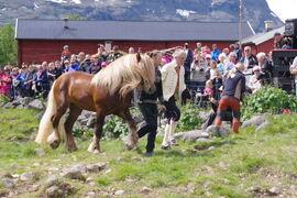 Vi gleder oss til den dagen vi kan åpne opp for alle som ønsker å få se på hesteslippet i Sikkilsdalen, slik som da Svangstu Fardølen ble sluppet i Åkrehamna i 2018. Den dagen har dessverre ikke kommet enda, og årets slipp vil være stengt for publikum.