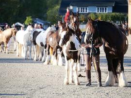 Det var flotte hester på rekke og rad under lørdagens utstilling på Stav.