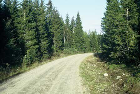 Skogsbilveg i god stand